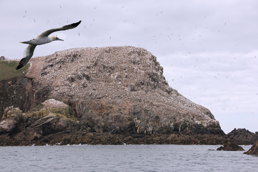 Travel: Bretagne – Sept Îles