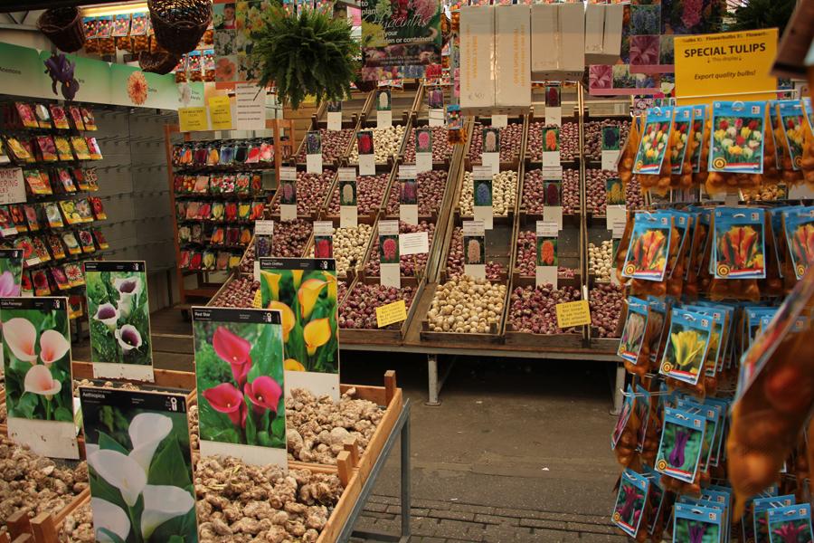 Stand auf dem Blumenmarkt mit Tulpenzwiebeln