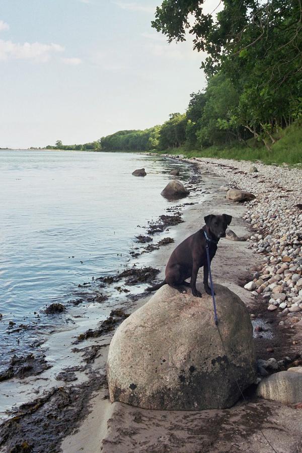 Reisen mit Hund 1