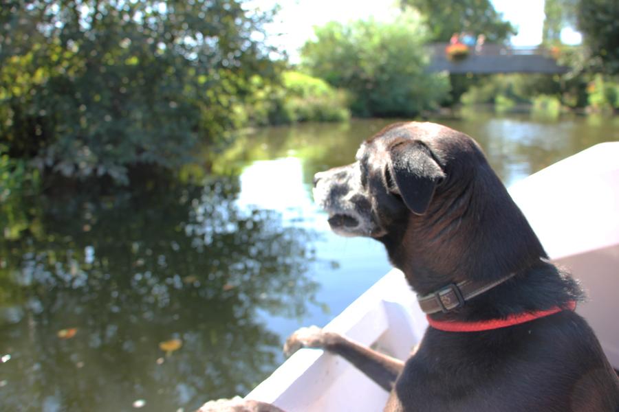 Reisen mit Hund 2