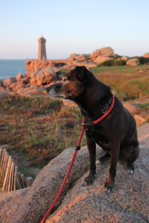 Reisen mit Hund 3