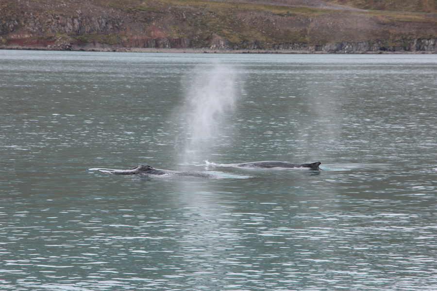 whale-watching-in-nord-island-8