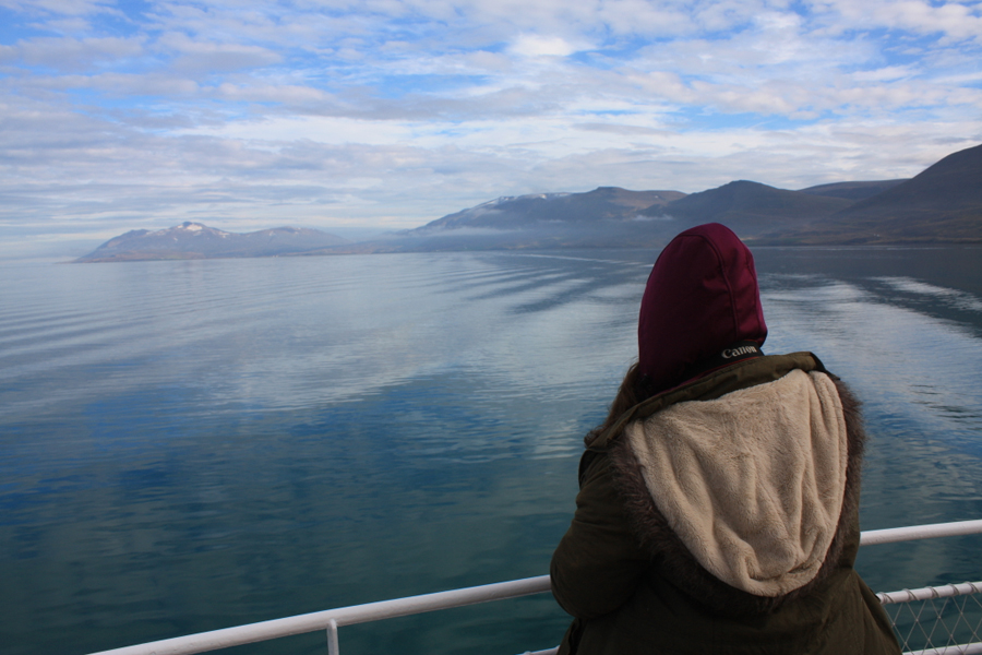 whale-watching-in-nord-island-9