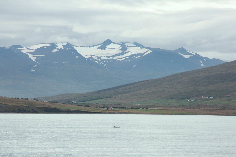 Berge bei Dalvik Island
