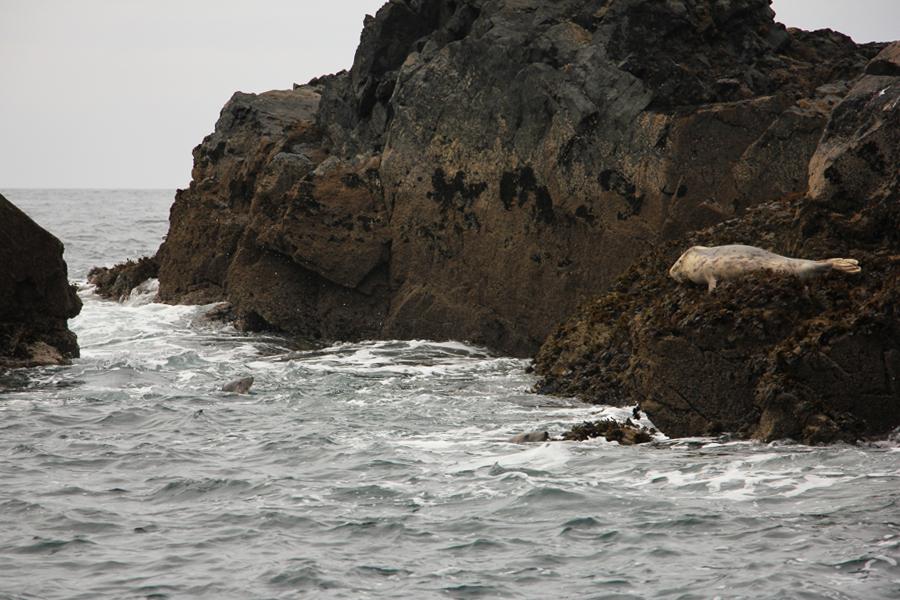 Südengland Roadtrip Cornwall St Ives Seehunde