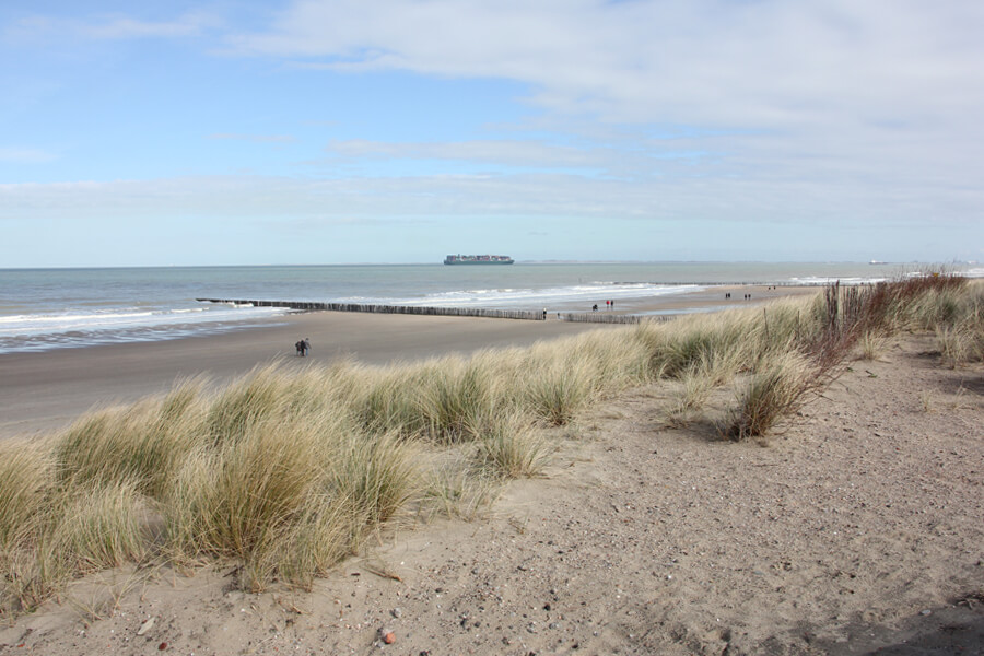 Dünen und Strand in Zeeland im Winter