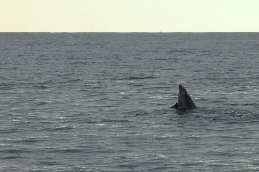 Neugieriger Delfin im Wasser