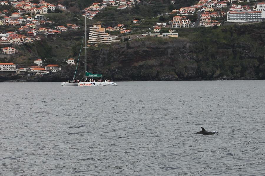 Delfin schwimmt an Katamarin vorbei.