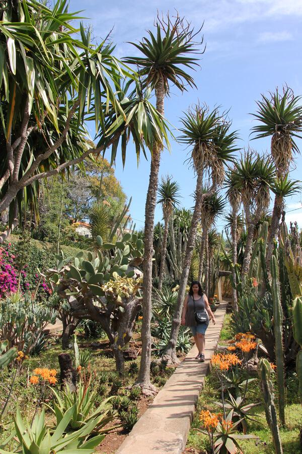 Zwischen den Kakteen im botanischen Garten in Funchal.