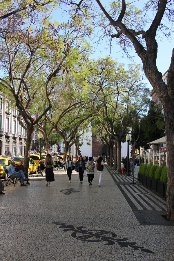 Straße mit Bäumen im Zentrum Funchals.