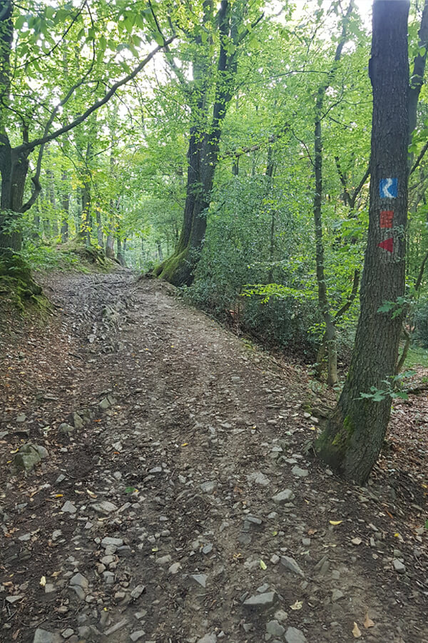 Steiler Pfad am Rheinsteig
