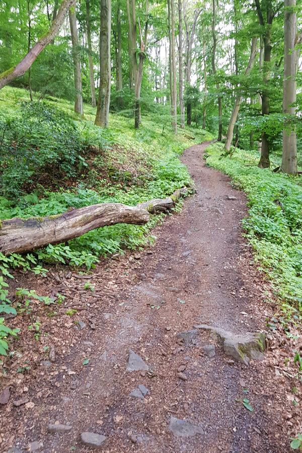 Waldweg am Nonnenstromberg.