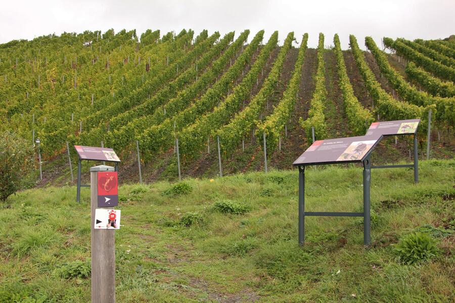 Schilder auf dem Wein-Erlebnis-Pfad