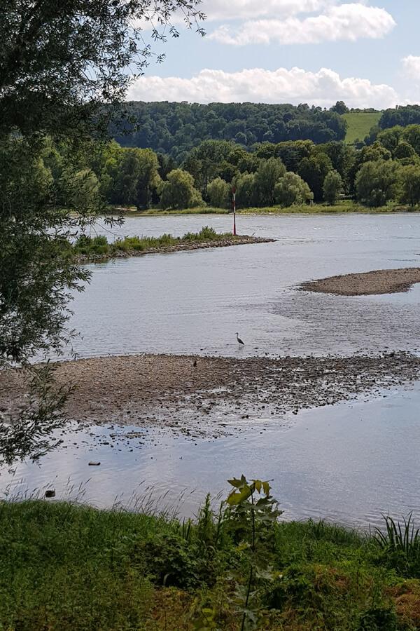 Der Rhein und das Rheinufer.