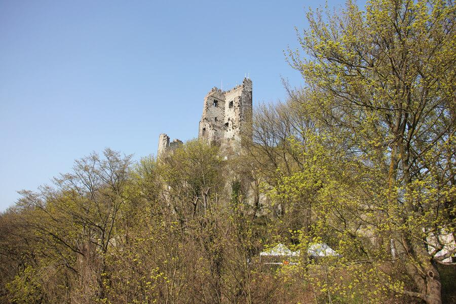 Burgruine auf dem Drachenfels