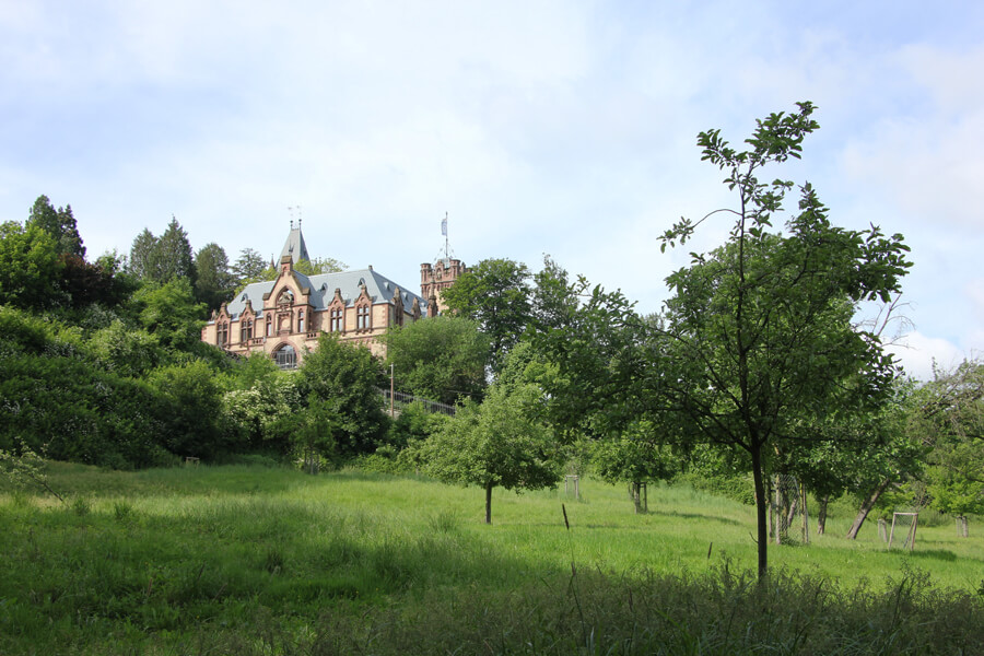 Wiese unterhalb von Schloss Drachenburg.