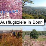 Ausflugsziele in Bonn und Umgebung   14 Ideen für das ganze Jahr