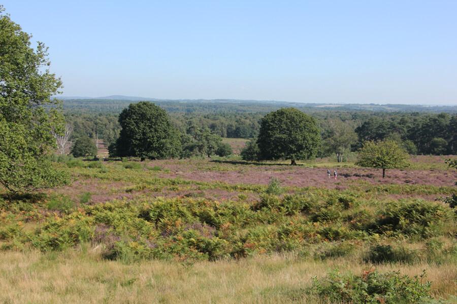 Aussicht vom Telegraphenberg auf die Heide