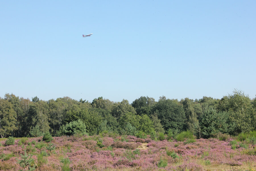 Flugzeug startet über blühender Heidelandschaft