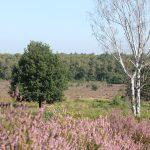 Fliegenberg Tour: in der Wahner Heide zur Heideblüte